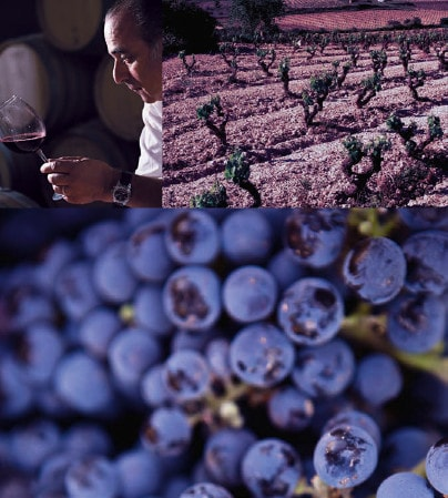 Spanish winemaker, vineyard and grapes