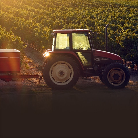 A red tractor in a sunny vineyard in Australia